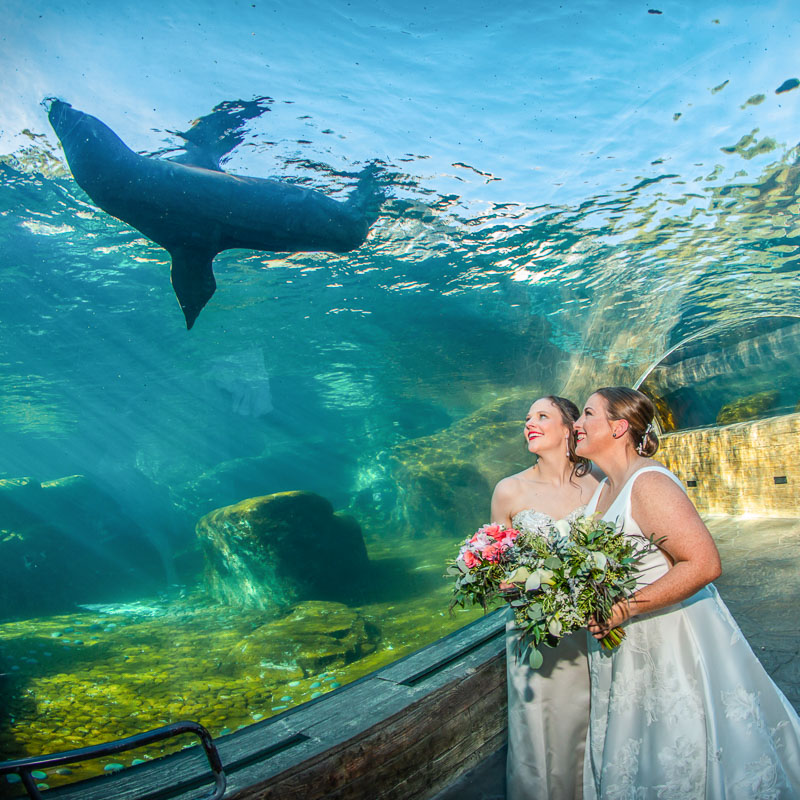 Greater St Louis area wedding photography gallery: Julianne and Annie